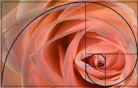 rose spiral_safe copy