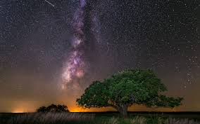 tree galaxy_safe copy